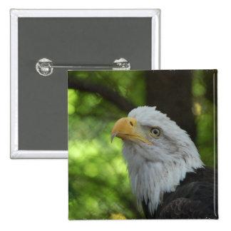 American Bald Eagle Square Pin