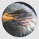 American bald eagle with American flag stickers