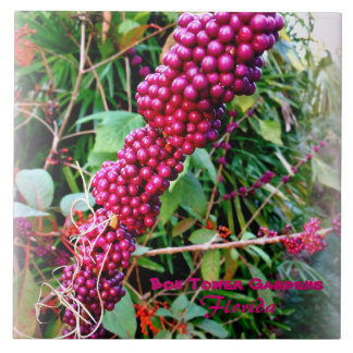American Beautyberry at Bok Tower Gardens Florida Large Square Tile