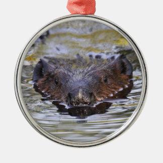 American Beaver Ornament