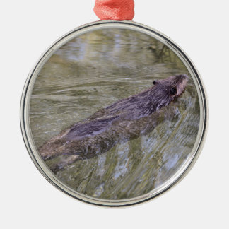 American Beaver Silver-Colored Round Decoration