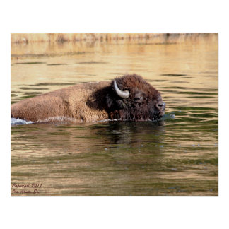 American Bison #2 Poster
