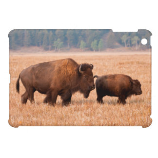 American Bison (Bison Bison) Cow And Calf iPad Mini Case