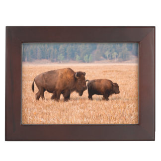 American Bison (Bison Bison) Cow And Calf Keepsake Box