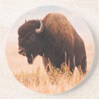 American Bison (Bison Bison) Herd In Teton 2 Coaster