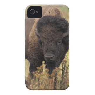 American Bison Blackberry Bold Barely There Case Case-Mate iPhone 4 Cases