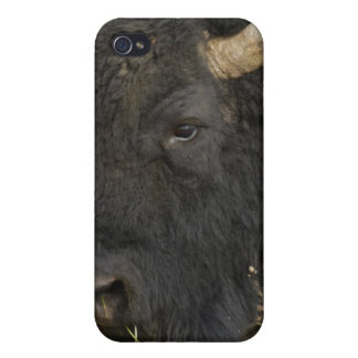 American Bison 'Buffalo' Bison bison), male, iPhone 4/4S Covers