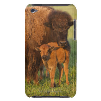 American Bison cow and calf, North Dakota Barely There iPod Cover