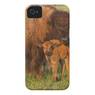 American Bison cow and calf, North Dakota Case-Mate iPhone 4 Cases