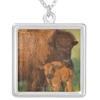 American Bison cow and calf, North Dakota Silver Plated Necklace