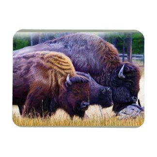 American Bison Family Rectangular Photo Magnet