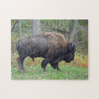 American Bison In Early Autumn Jigsaw Puzzle