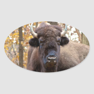 American Bison in Fall Colors Woods Animal Photo Oval Sticker