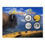 American Bison on coins Postcards