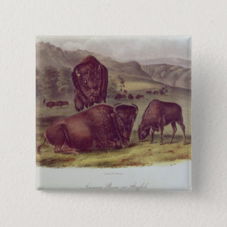 American Bison or Buffalo 15 Cm Square Badge