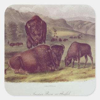 American Bison or Buffalo Square Sticker