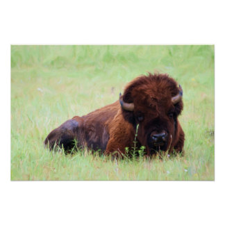 American Bison Painting Posters