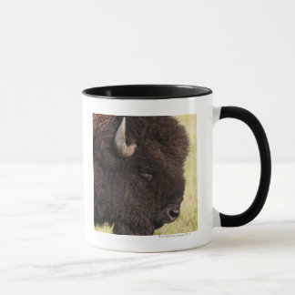 American Bison, South Dakota Mug