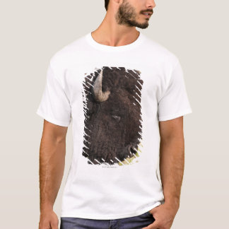 American Bison, South Dakota T-Shirt