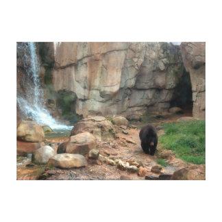 American Black Bear Stretched Canvas Prints