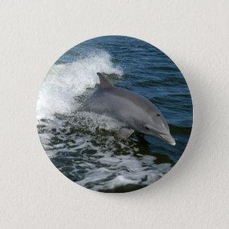 American Bottlenose Dolphin 6 Cm Round Badge