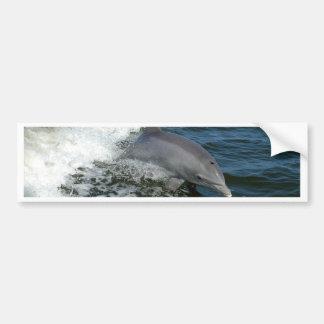 American Bottlenose Dolphin Bumper Sticker