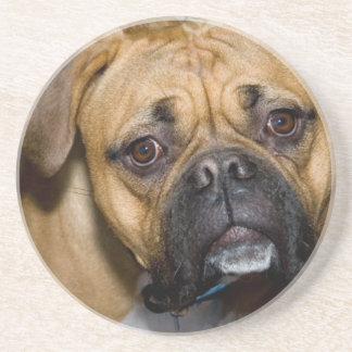American Boxer Dog Coasters