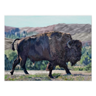 American Buffalo Bison Poster