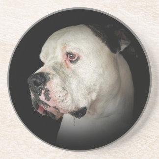 American Bull Dog portrait Sandstone Coaster