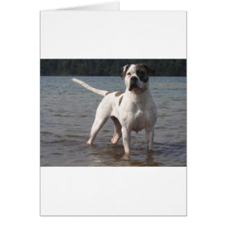 American Bulldog Dog In The Water Card