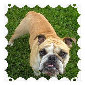 American Bulldog Invitation