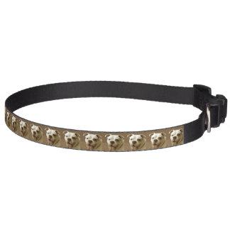 American Bulldog Pet Collars