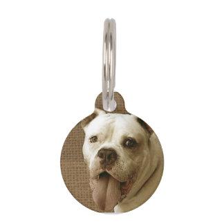 American Bulldog Pet Tag