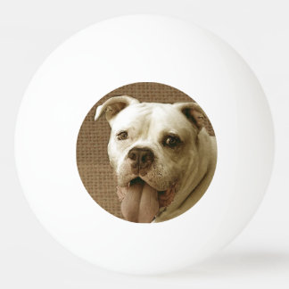 American Bulldog Ping-Pong Ball
