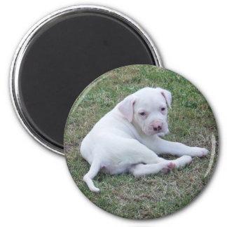 American Bulldog Puppy Magnet