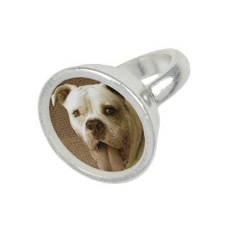 American Bulldog Ring