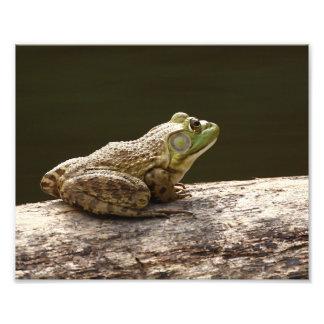 American Bullfrog Art Photo