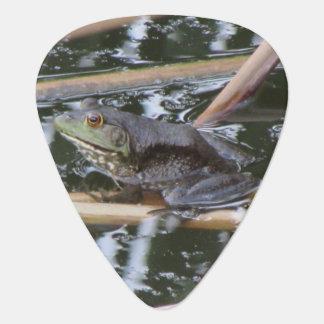 American Bullfrog Plectrum