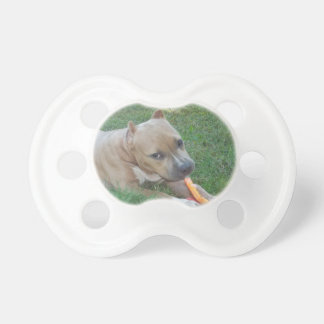 American bully Puppy Pacifier