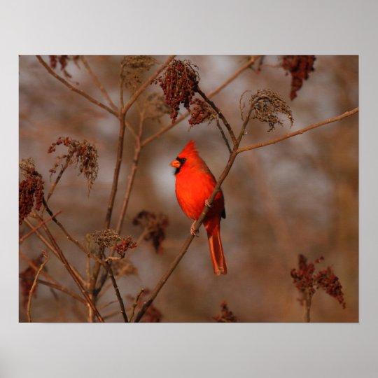American Cardinal Poster