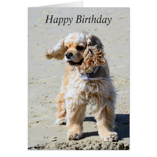 American Cocker Spaniel dog custom birthday card