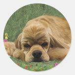 American Cocker Spaniel Round Sticker