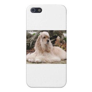 American Cocker Spaniel Series iPhone 5 Covers