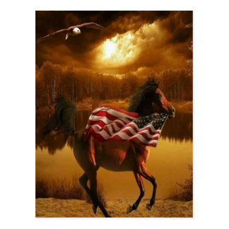 American Colt Postcard