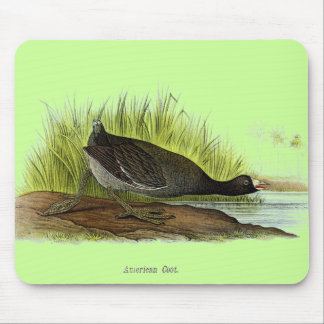 American Coot Mouse Pad