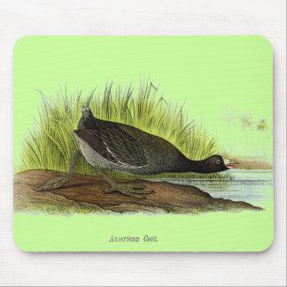 American Coot Mousepads