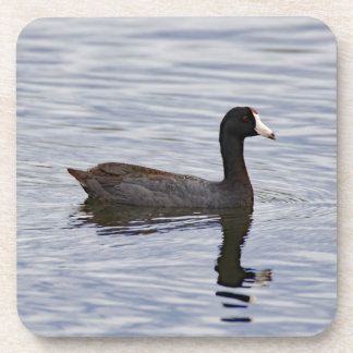 American Coot Reflecting Coaster