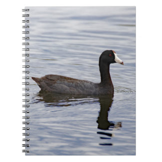 American Coot Reflecting Notebook