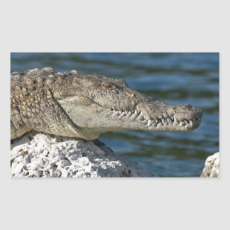 American Crocodile Rectangular Sticker