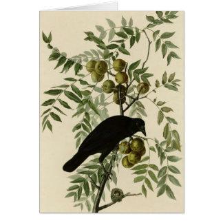 American Crow Card